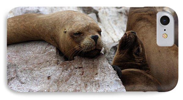 Wildlife Of The Ballestas Islands IPhone Case by Aidan Moran
