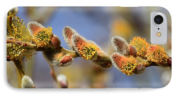 Willow Buds IPhone Case by Donna Kennedy