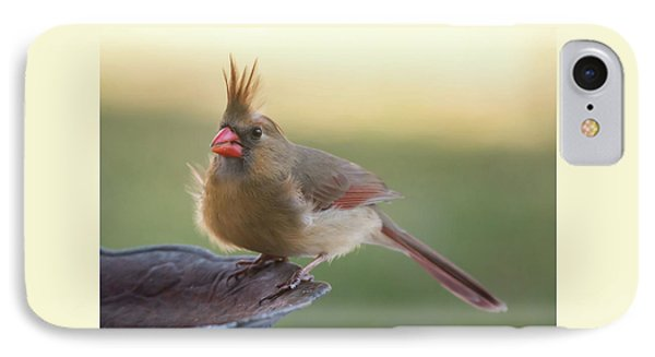 IPhone Case featuring the photograph Wind Blown Cardinal  by Terry DeLuco