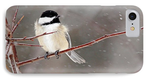 Windblown Chickadee IPhone Case