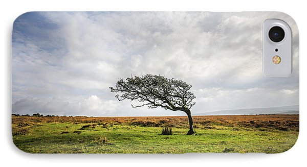 Windswept Tree IPhone Case