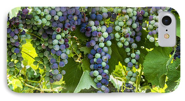 Wine Grape Colors IPhone Case by Teri Virbickis