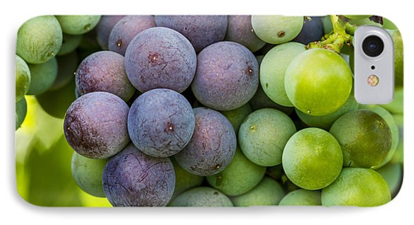 Wine Grapes Close Up IPhone Case by Teri Virbickis