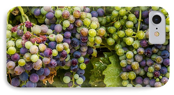 Wine Grapes On The Vine IPhone Case by Teri Virbickis