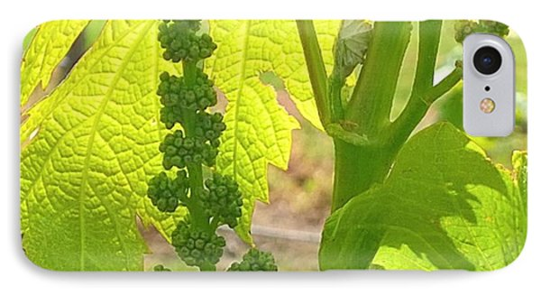 #wine On The #vine 😊 #vineyard IPhone Case by Shari Warren