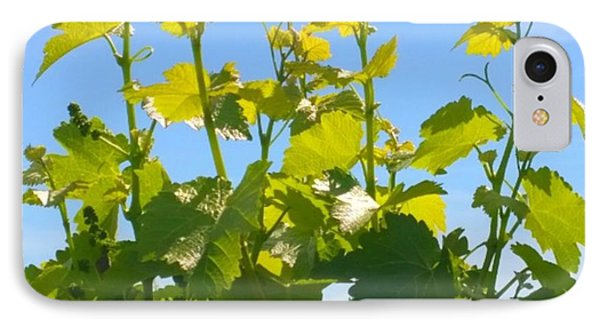 #wine #vines Reaching For The Sky :-) IPhone Case by Shari Warren