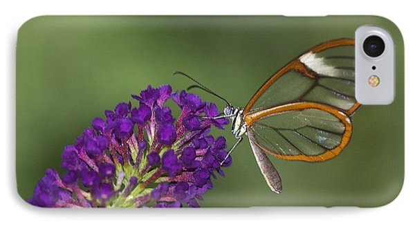 Wings Like Glass IPhone Case by Ruth Jolly
