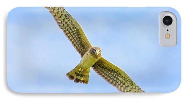 Wings Of The Raptor IPhone Case by Mark Andrew Thomas