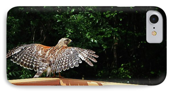 Wingspan Of Hawk IPhone Case