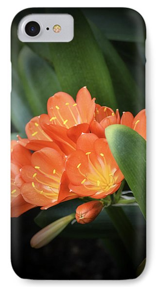 Winter Bloom Clivia Phone Case by Julie Palencia