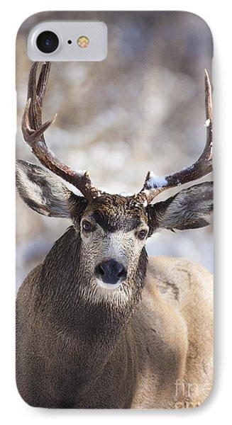 Winter Buck II IPhone Case