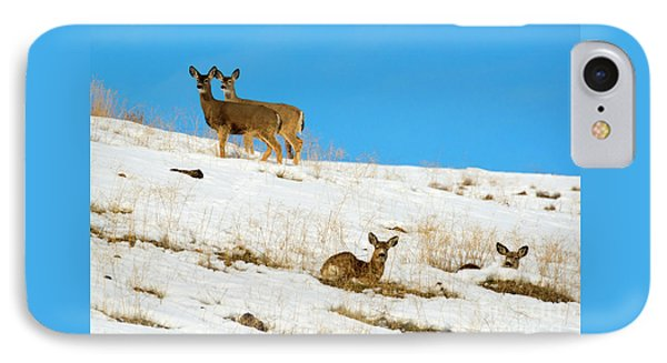 IPhone Case featuring the photograph Winter Deer by Mike Dawson