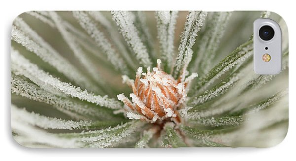IPhone Case featuring the photograph Winter Evergreen by Ana V Ramirez