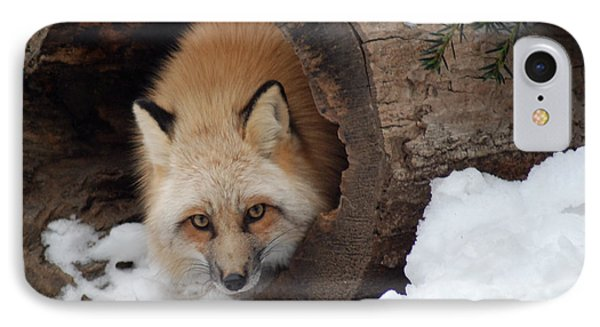 Winter Fox IPhone Case by Richard Bryce and Family