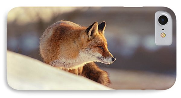 Winter Fox Warmed By The Sun IPhone Case by Roeselien Raimond