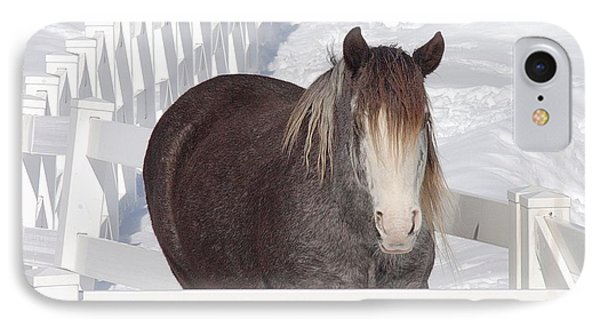 Winter Horse IPhone Case by Debbie Stahre