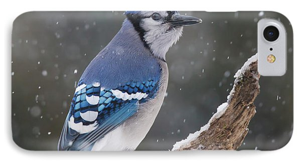 IPhone Case featuring the photograph Winter Jay by Mircea Costina Photography