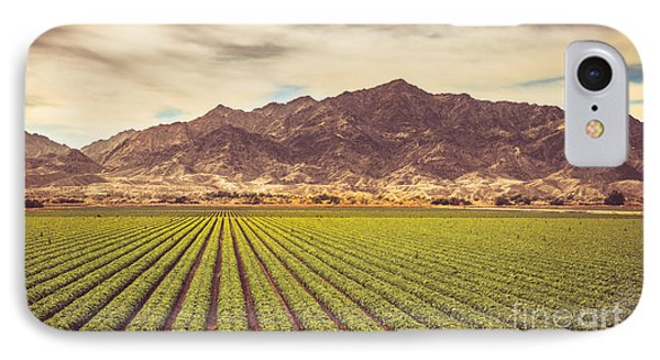 Winter Lettuce IPhone Case by Robert Bales