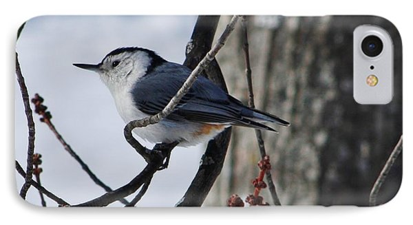 IPhone Case featuring the photograph Winter Nut Hatch by Al Fritz