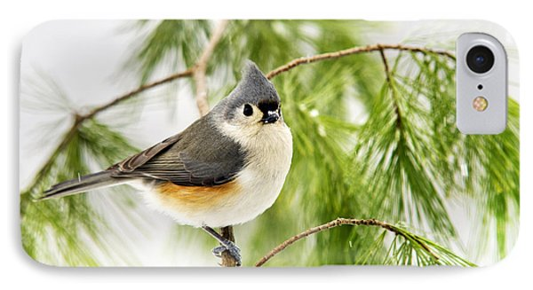 Winter Pine Bird IPhone Case by Christina Rollo