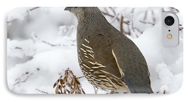 Winter Quail IPhone Case by Mike Dawson