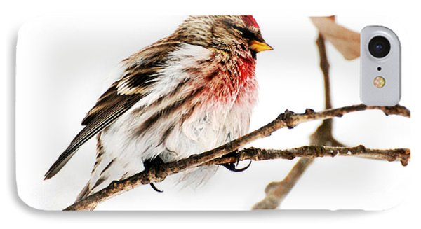 Winter Redpoll Phone Case by Christina Rollo