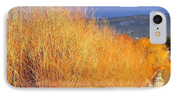 Winter Willows IPhone Case by Will Borden