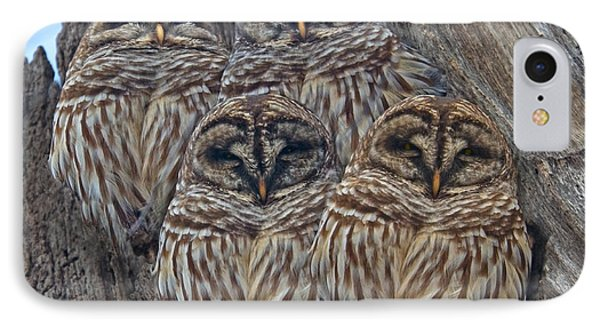 Wintry Barred Owls   IPhone Case by Betsy Knapp