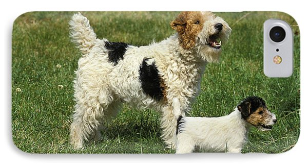 Wire-haired Fox Terrier IPhone Case
