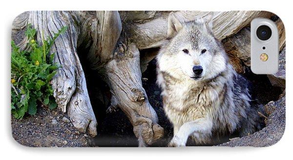 Wolf Den 1 Phone Case by Marty Koch