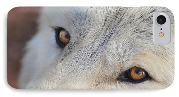 Wolf Eyes IPhone Case by Carolyn Dalessandro