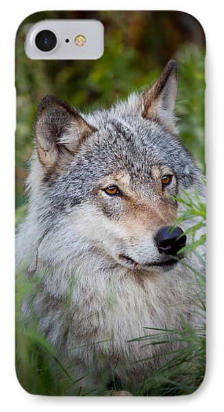 Wolf In The Grass IPhone Case by Yngve Alexandersson