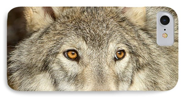 Wolf Portrait IPhone Case by Jack Bell