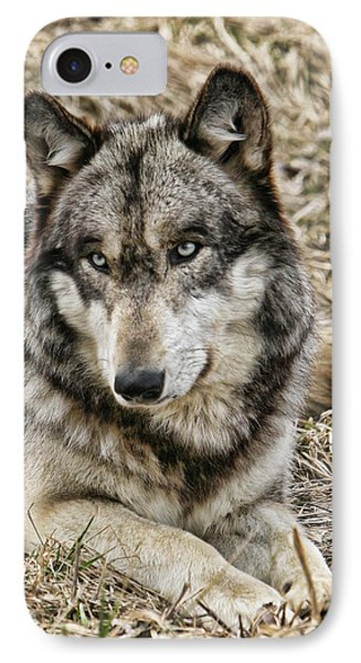 IPhone Case featuring the photograph Wolf Portrait by Shari Jardina