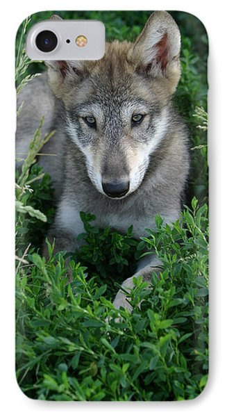 Wolf Pup Portrait Phone Case by Shari Jardina