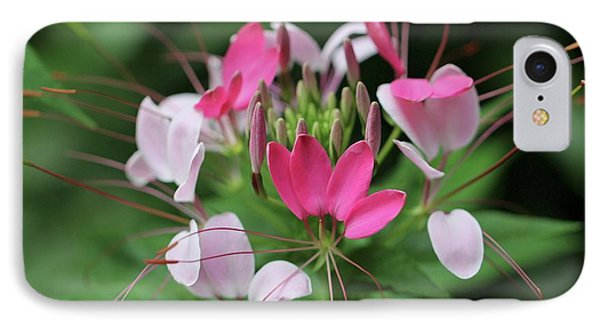 IPhone Case featuring the photograph Wonders Of Cleome by Deborah  Crew-Johnson