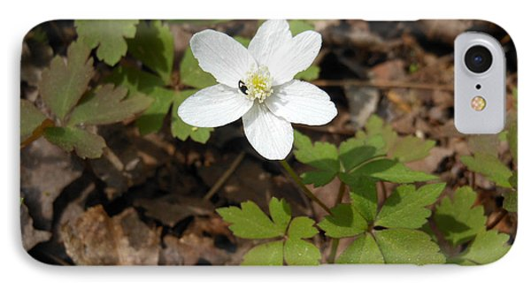 IPhone Case featuring the photograph Wood Anemone by Linda Geiger