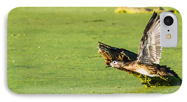 Wood Duck Hen Takes Flight IPhone Case by Edward Peterson