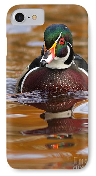 Wood-duck-male On The Golden Light IPhone Case