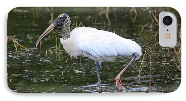 Wood Stork Through The Marsh IPhone Case by Carol Groenen