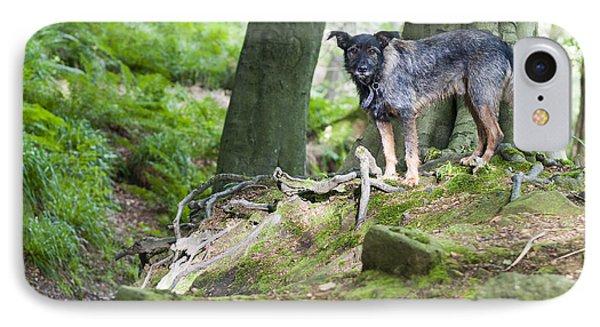 Woodland Dog IPhone Case by David Isaacson