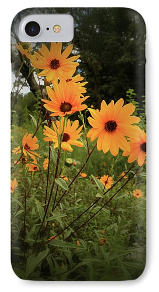 IPhone Case featuring the photograph Woodland Sunflower by Scott Kingery