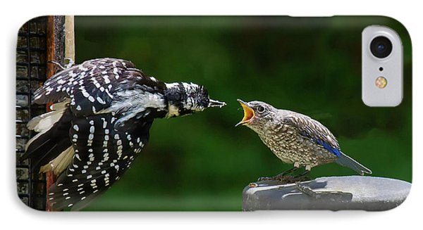 Woodpecker Feeding Bluebird IPhone Case