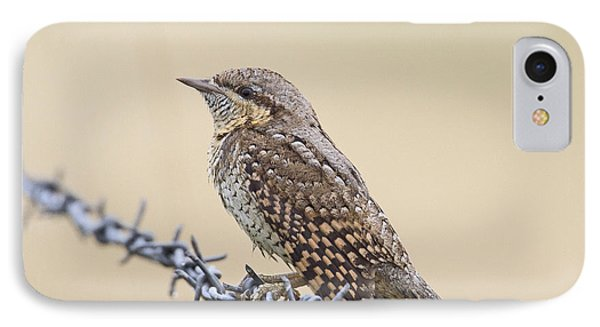 Wryneck On Wire IPhone Case