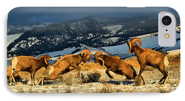 IPhone Case featuring the photograph Wyoming Bighorn Brawl by Adam Jewell