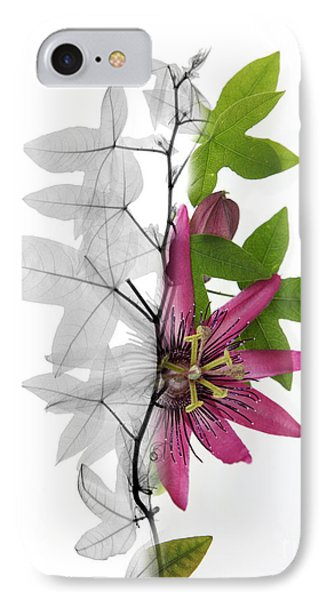 X-ray Of A Passion Flower IPhone Case by Ted Kinsman