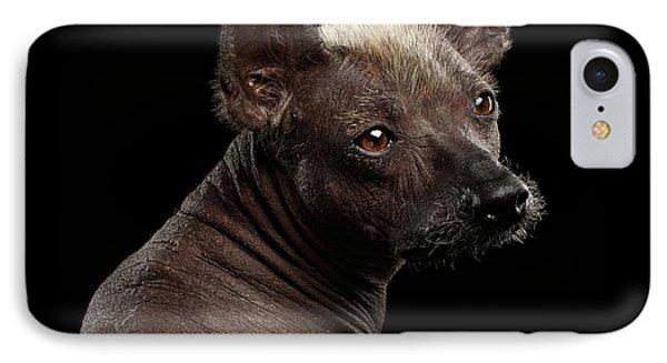 Xoloitzcuintle - Hairless Mexican Dog Breed, Studio Portrait On  IPhone Case by Sergey Taran