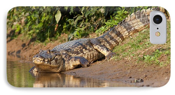 Alligator Crawling Into Yakuma River IPhone Case