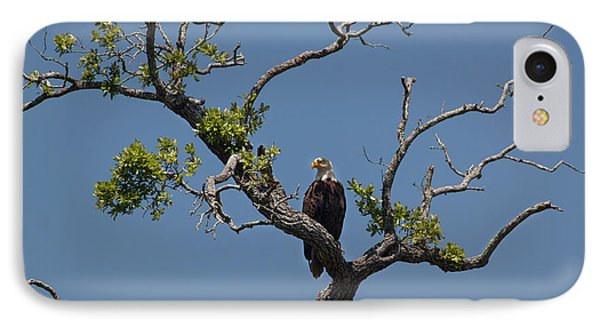IPhone Case featuring the photograph Yawkey Wildlife Reguge - American Bald Eagle by Suzanne Gaff