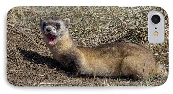 Yawning Black-footed Ferret IPhone Case